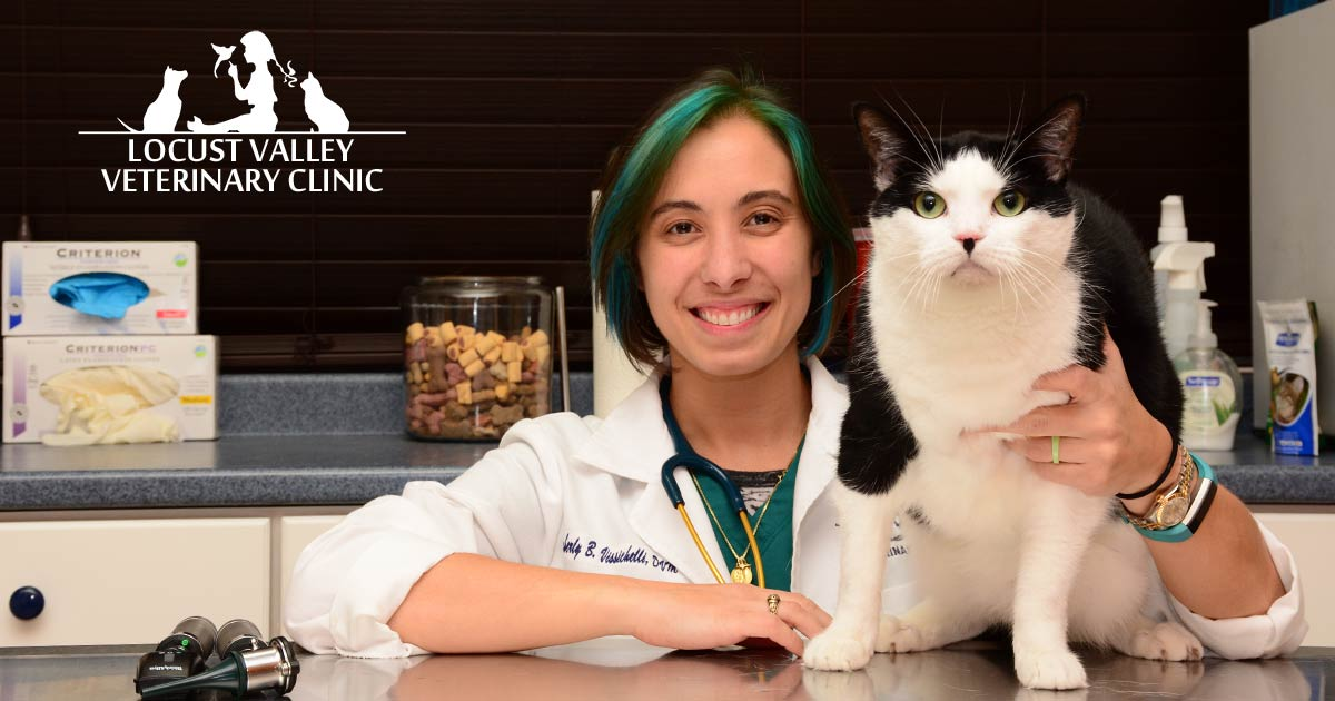 Oyster Bay Animal Hospital   Cancer Treatment for Pets